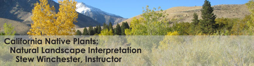 Stew Winchester - California Native Plants: Natural Landscape Interpretation